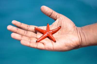 starfish-1198230_1920